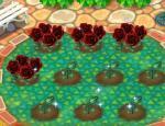 【ガーデン】赤いバラ.jpg