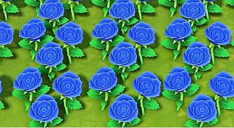 青バラ.png